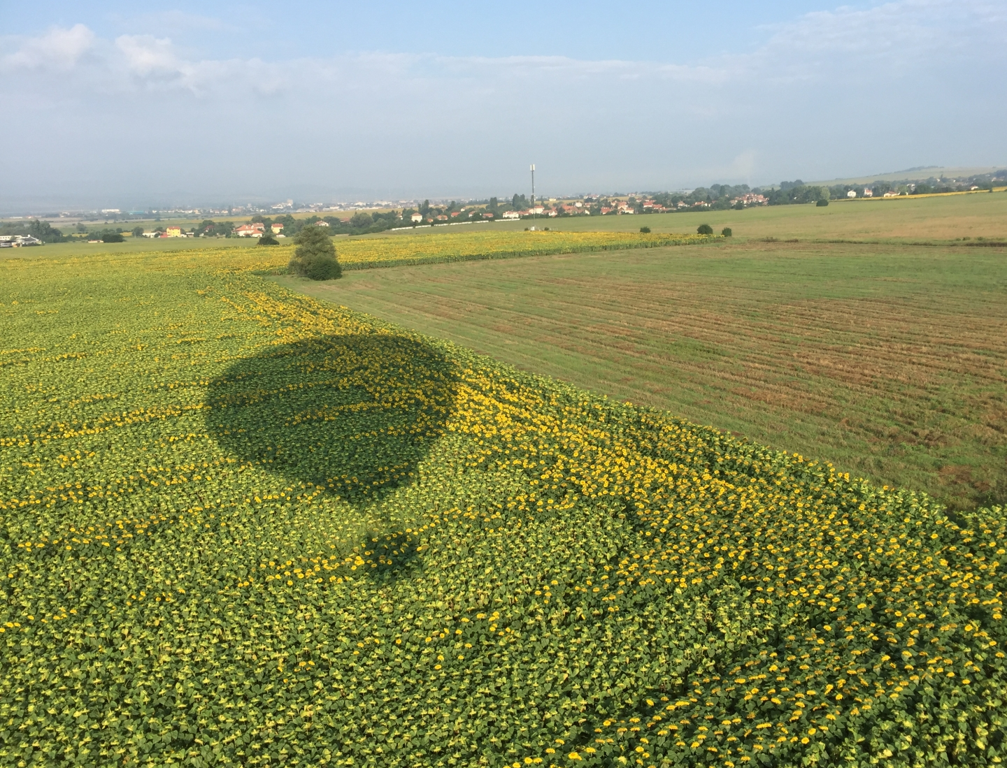 hot air balloon shadow over sunflower field